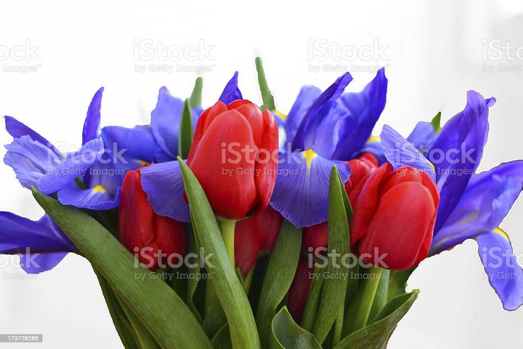 Red Blue Tulip Iris Bouquet royalty-free stock photo