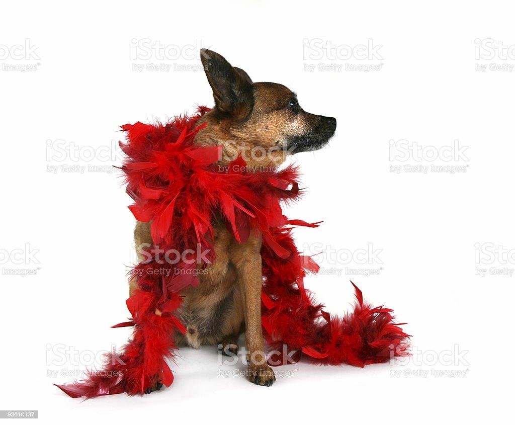red boa royalty-free stock photo