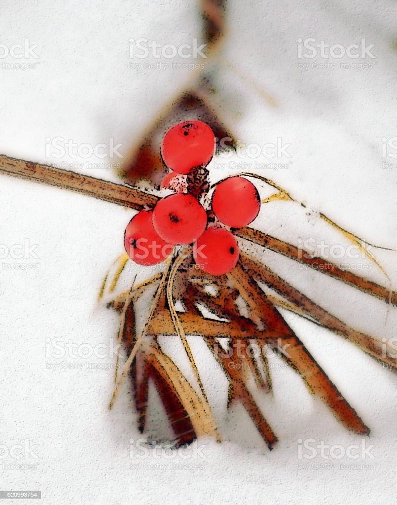 Red Bog Berries In The Snow stock photo