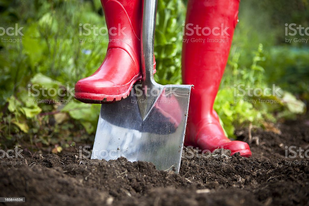 Red Boots Digging With Garden Spade stock photo