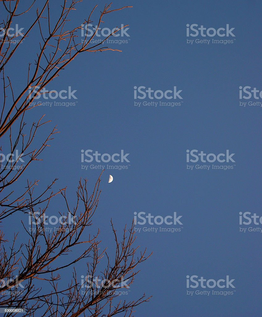 Red Branched Tree royalty-free stock photo