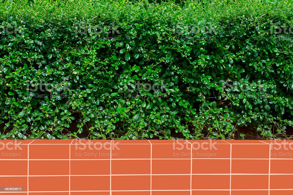Red brick wall and plant fence background royalty-free stock photo