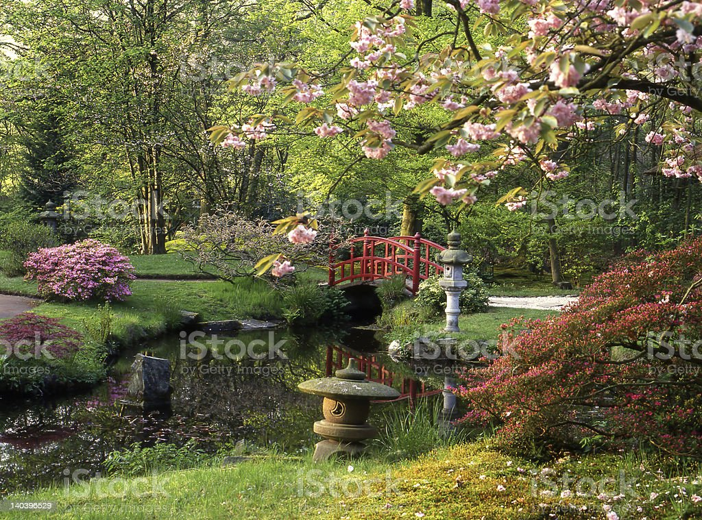 Red bridge in Japanese garden stock photo