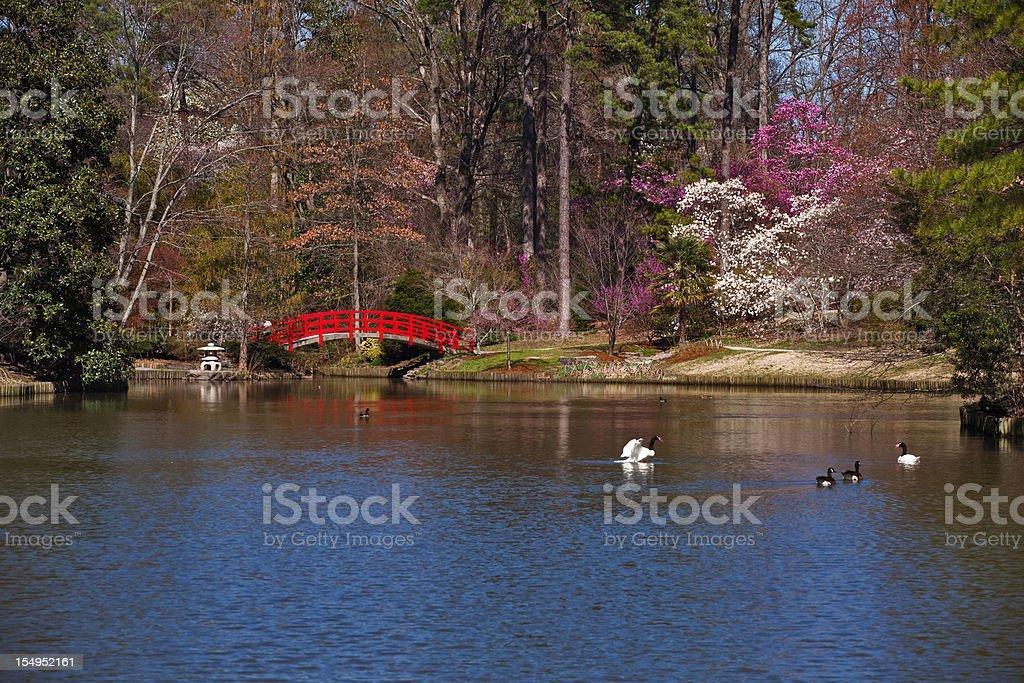 Red bridge in japanese garden stock photo