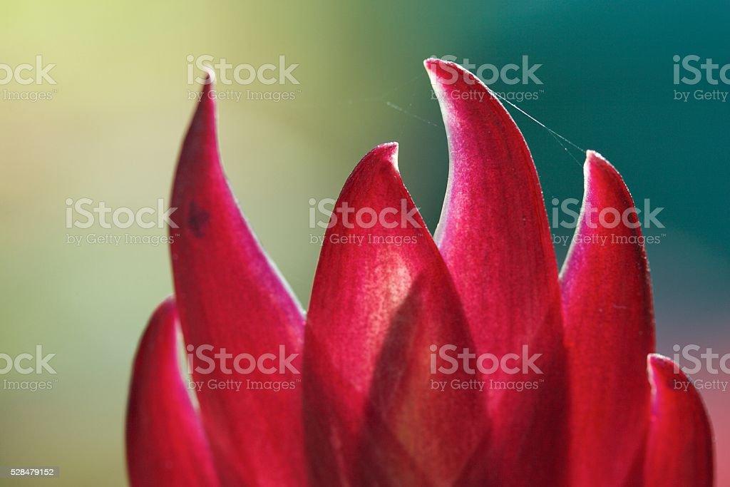 Red Bromeliad leafs stock photo