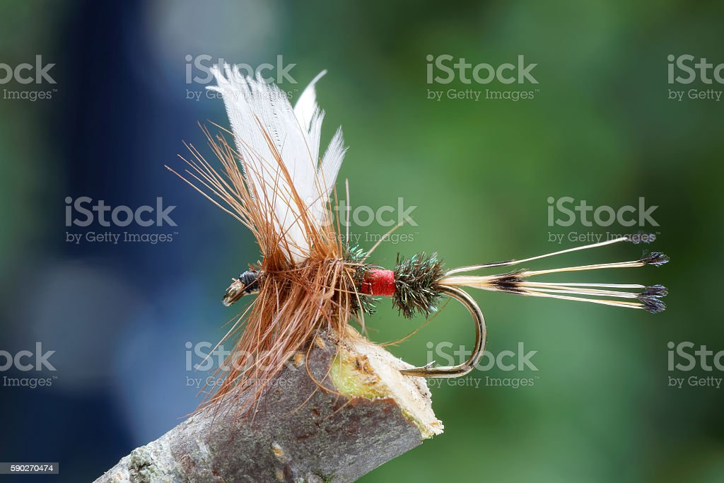 Red, brown and white fly fishing fly stock photo