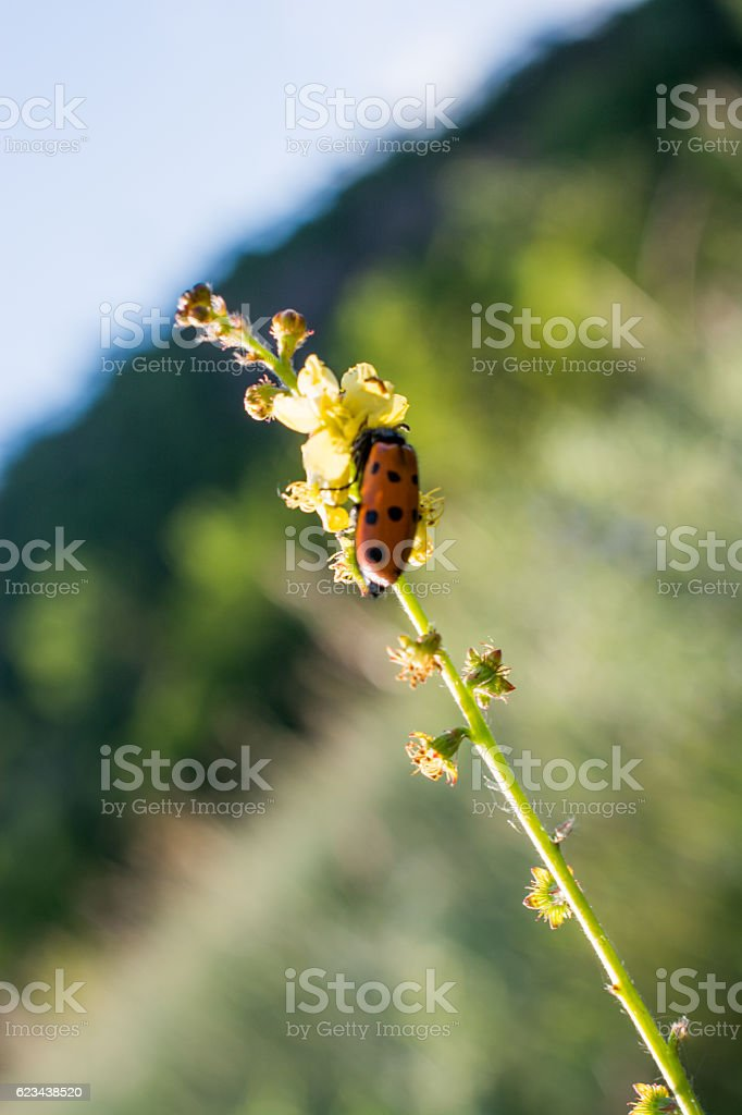 Red bug in the nature stock photo