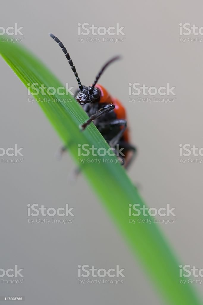 Red bug on green leaf stock photo