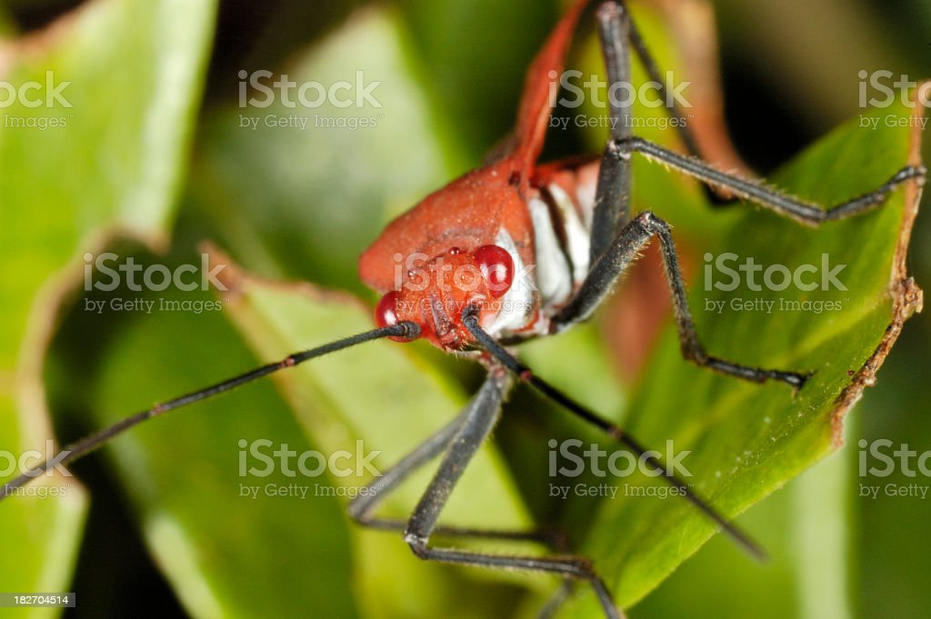 Red Bug stock photo