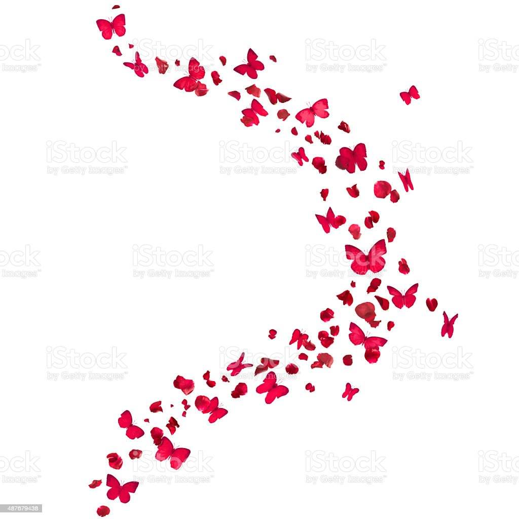 Red Butterflies and Rose Petals stock photo