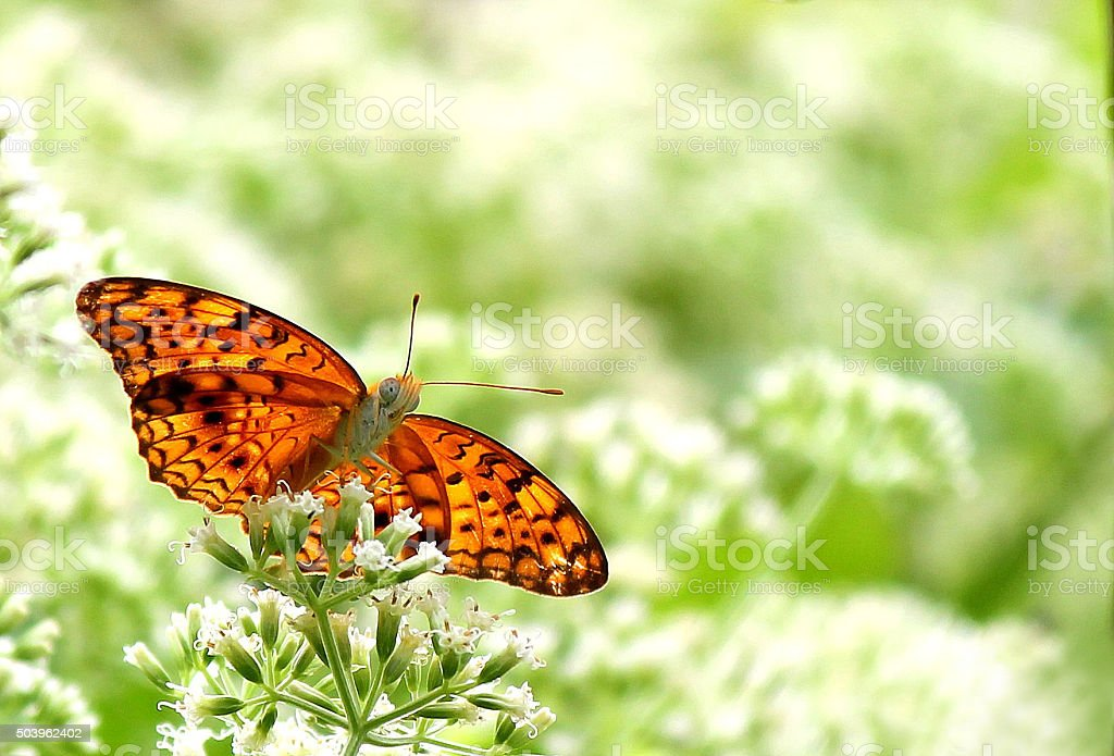 Red butterfly on flowers  bunch stock photo