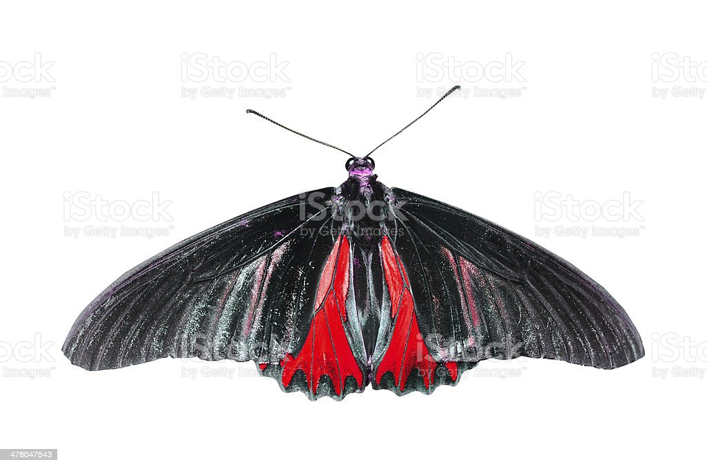 Red butterfly on isolated white background stock photo