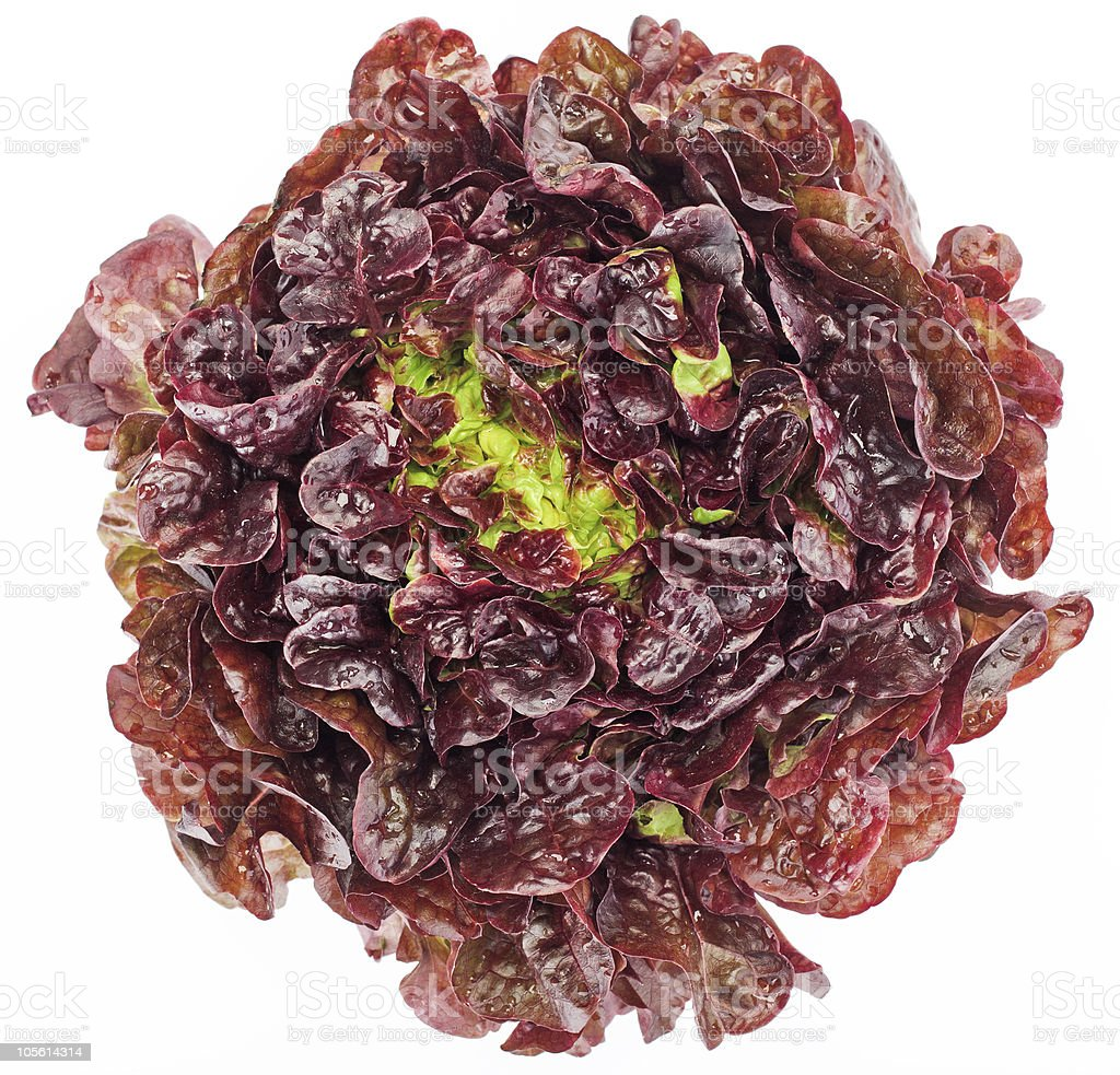Red cabbage lettuce head isolated on white stock photo