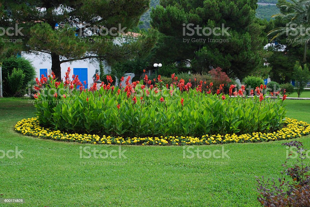 Red Canna coccinea and yellow Tagetes patula on the flowerbed. stock photo