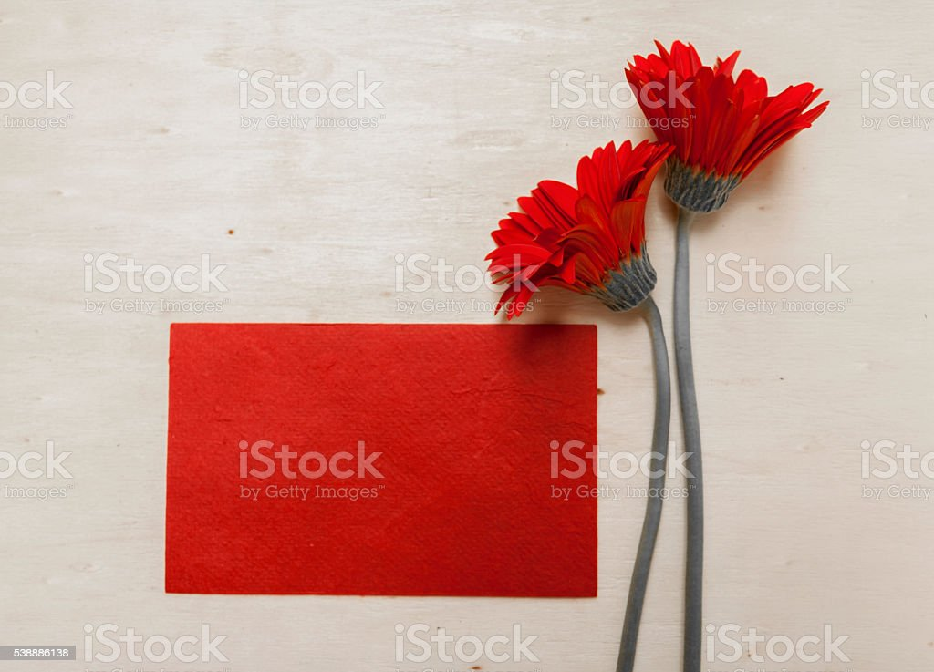 Red card with red daisy flower stock photo