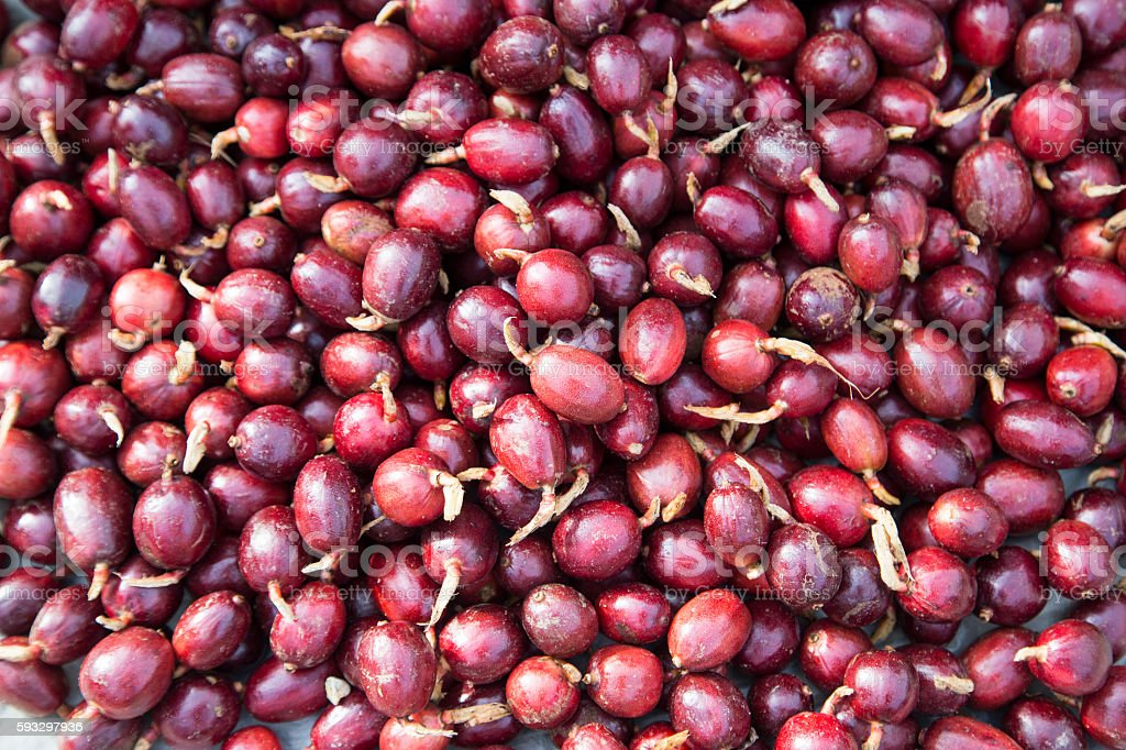 Red cardamom fruits stock photo