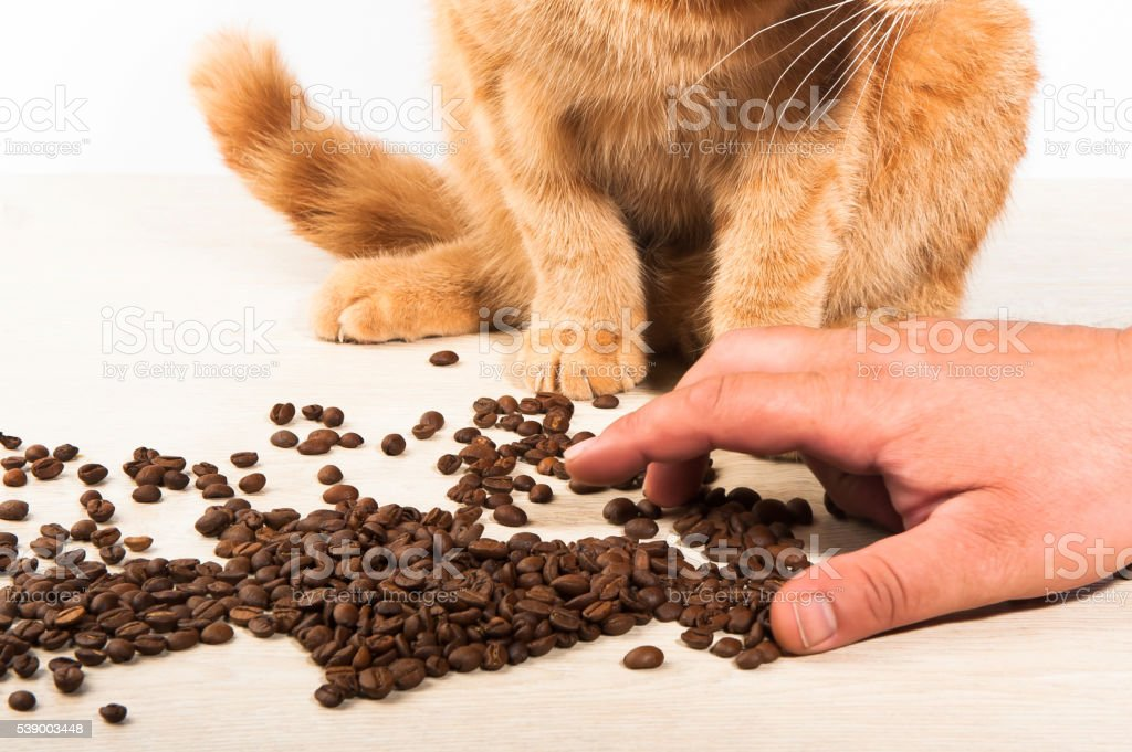 Red cat and coffee beans stock photo