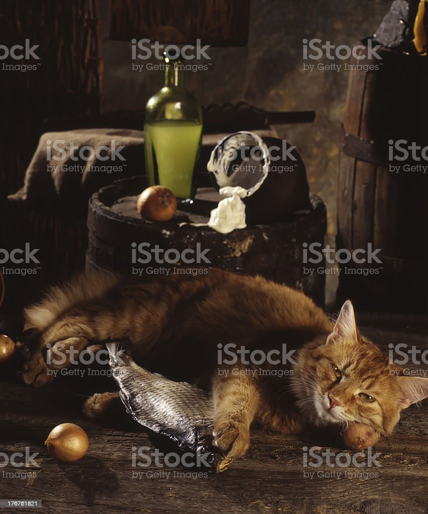 red cat, dried fish and sour cream royalty-free stock photo