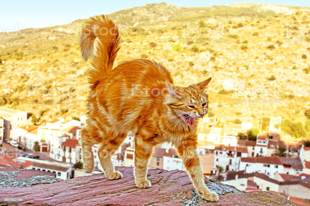 Red cat going on a wall at the height on the mountains background stock photo
