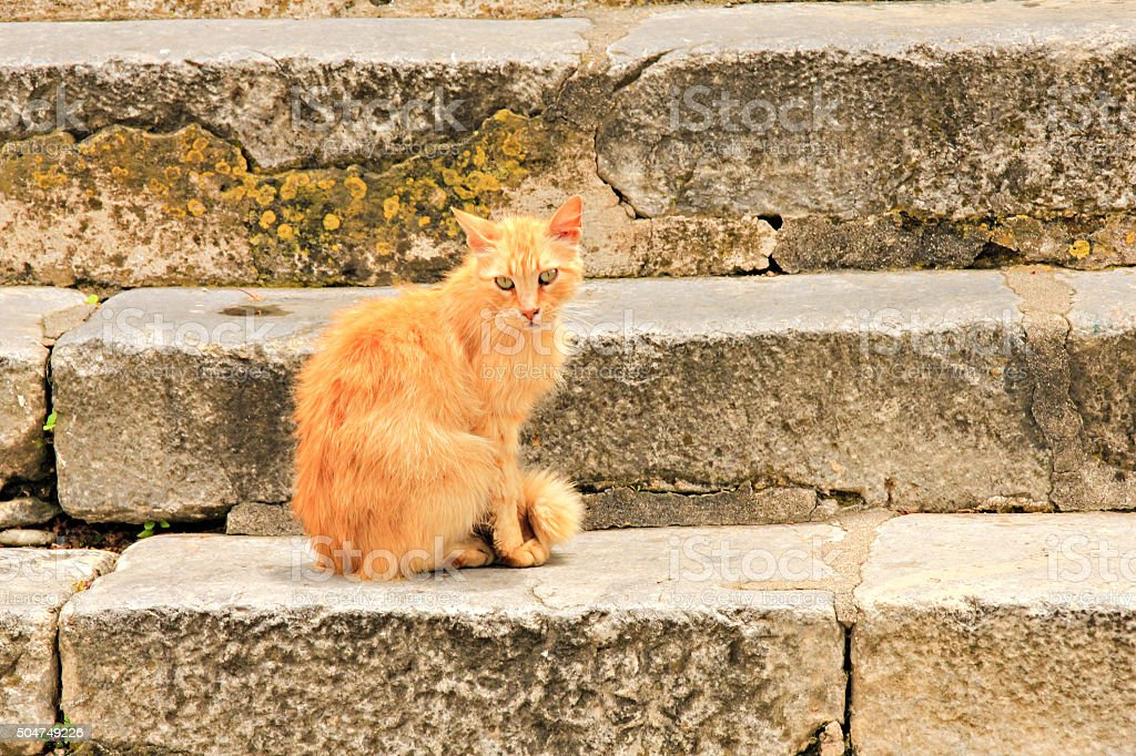 Red cat on steps stock photo
