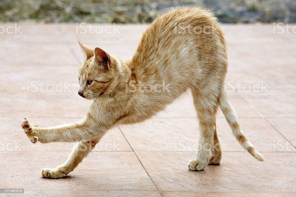 rote Katze stock photo