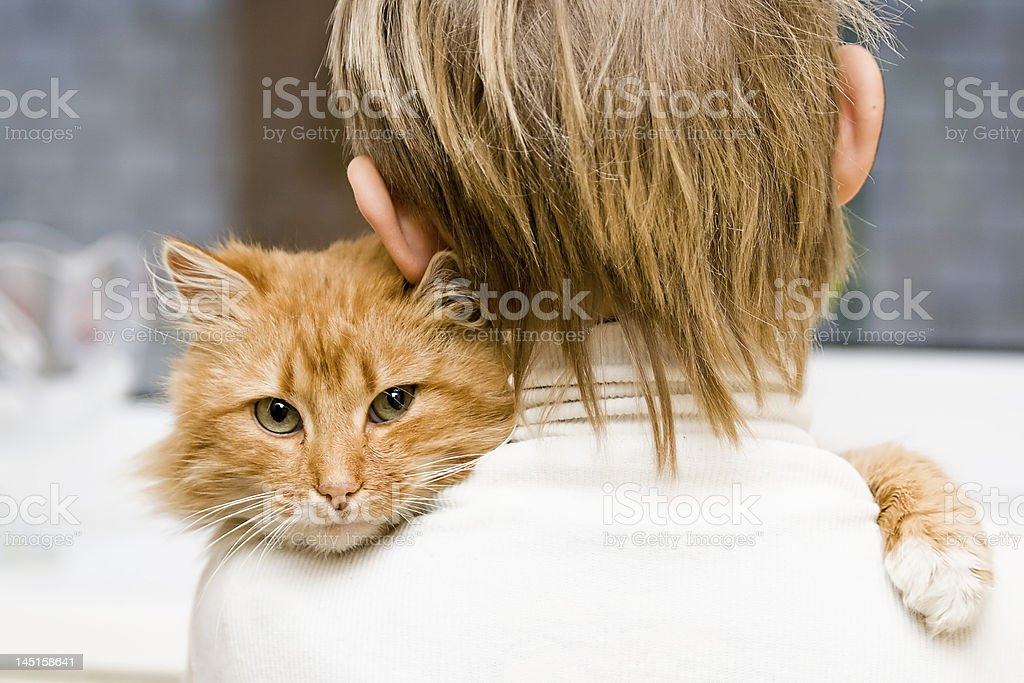 Red cat sitting on a shoulder at the child stock photo