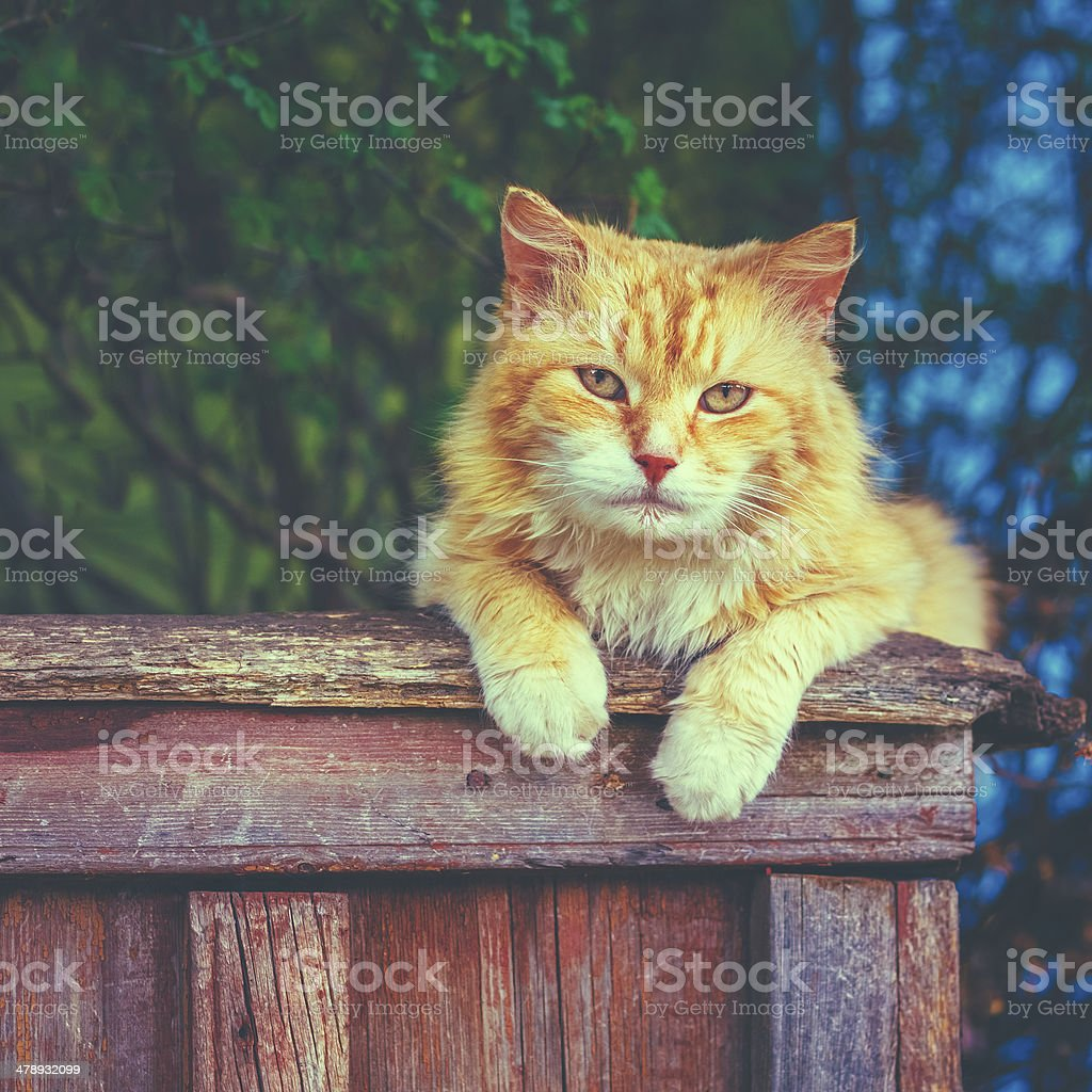 Red Cat Sitting On The Fence royalty-free stock photo