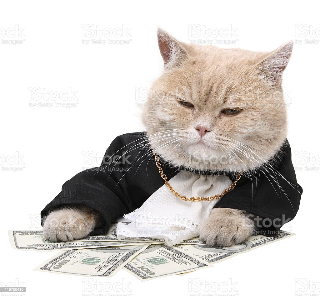 Red cat sitting on the dollar, Christmas stock photo