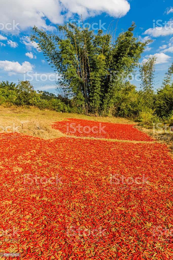 red chili Kalaw Shan state Myanmar stock photo