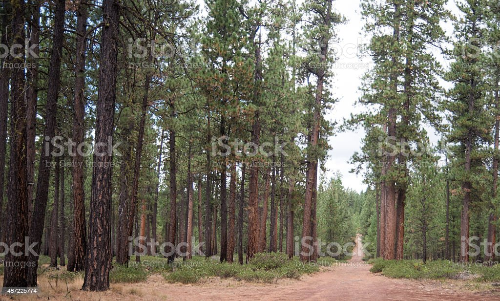 Red cinder forest road stock photo