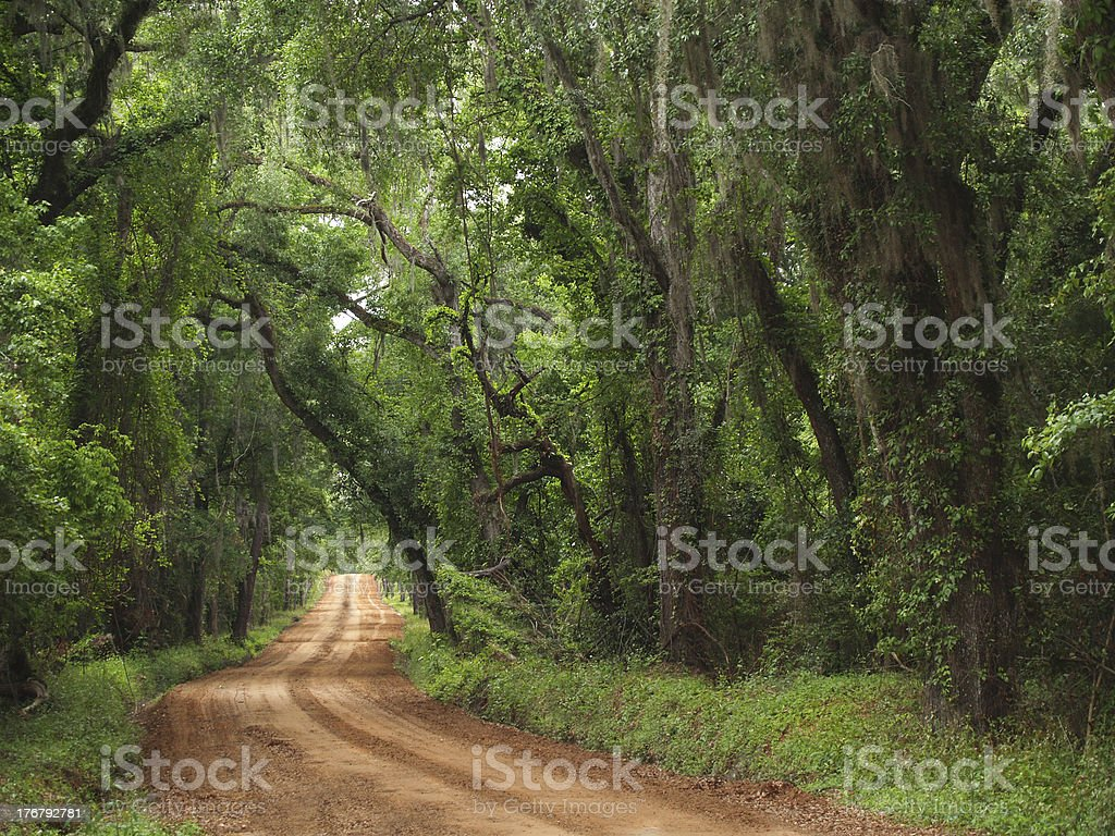 Red Clay Canopied Country Road stock photo