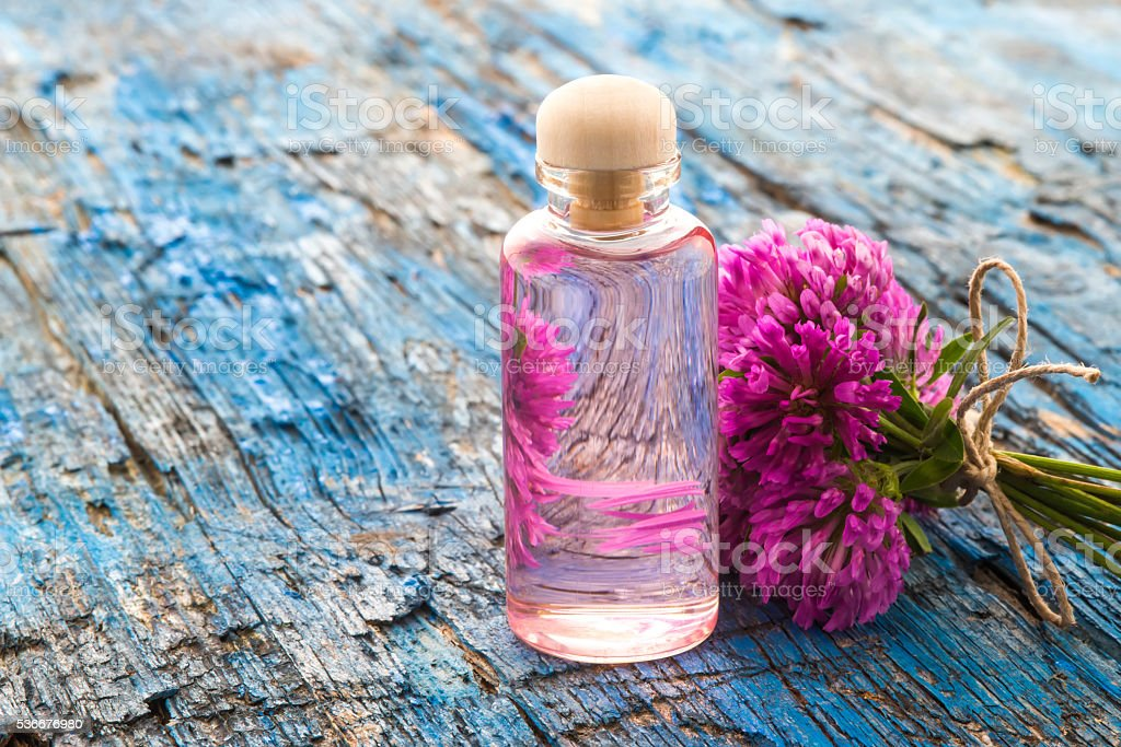 Red clovers flowers essence stock photo