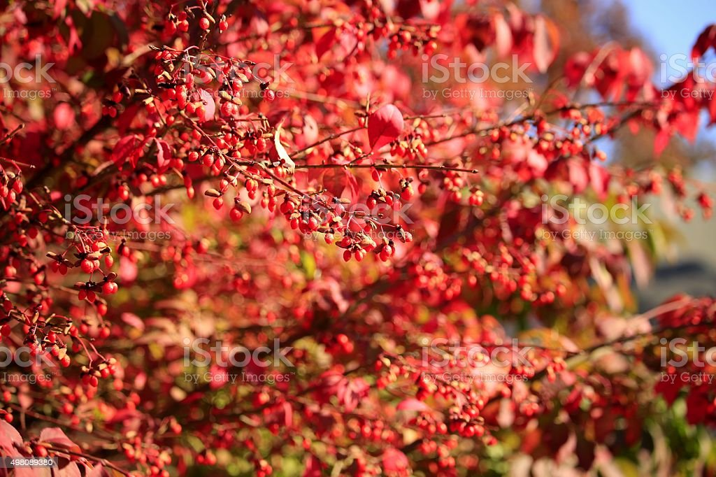 Red Colors of Autumn stock photo