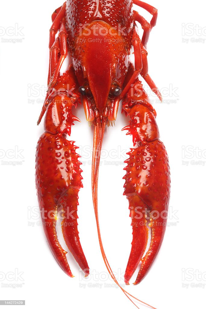 red crawfish on white background royalty-free stock photo