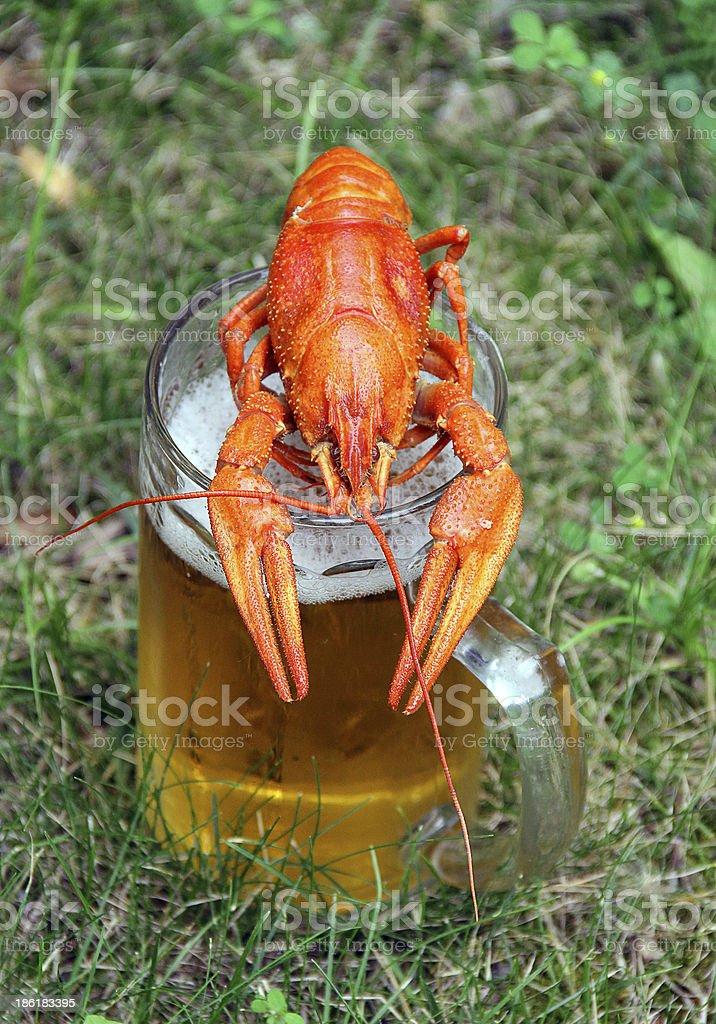 Red crawfish royalty-free stock photo