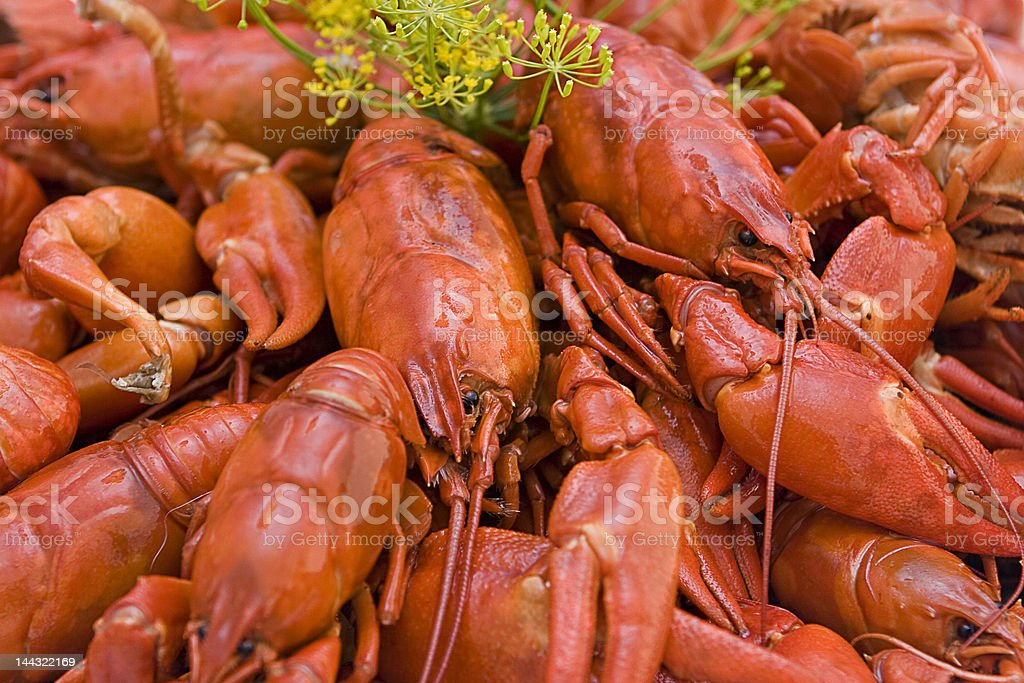 Red Crayfish royalty-free stock photo