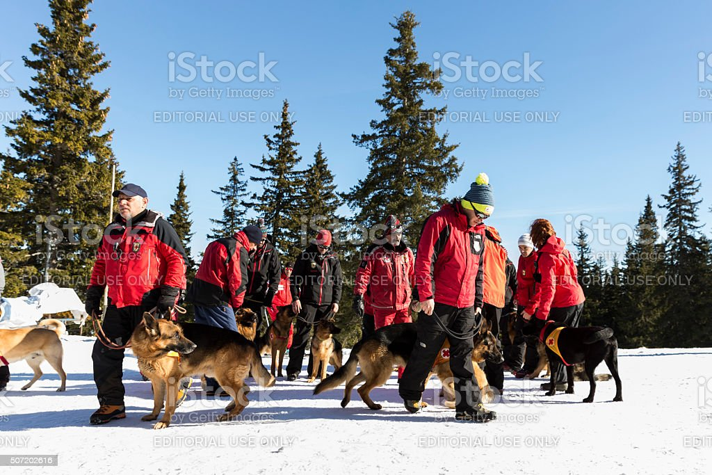 Red cross saviors with their dogs stock photo