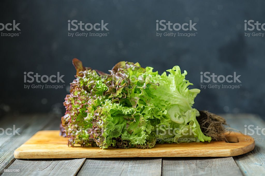 Red curly salad on a wooden table stock photo