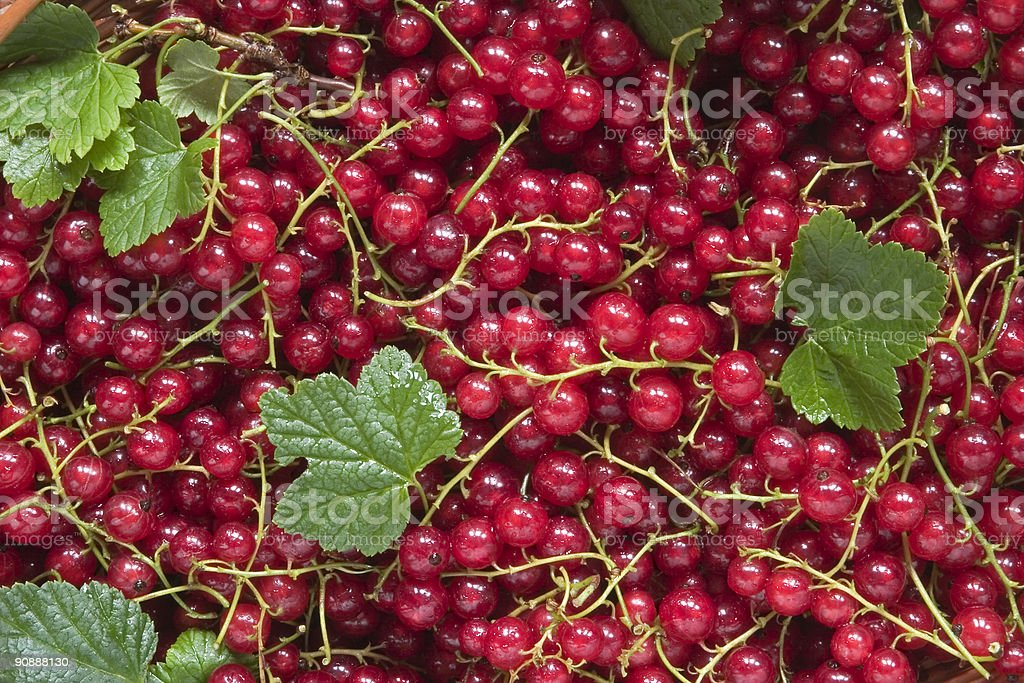 red currant background royalty-free stock photo