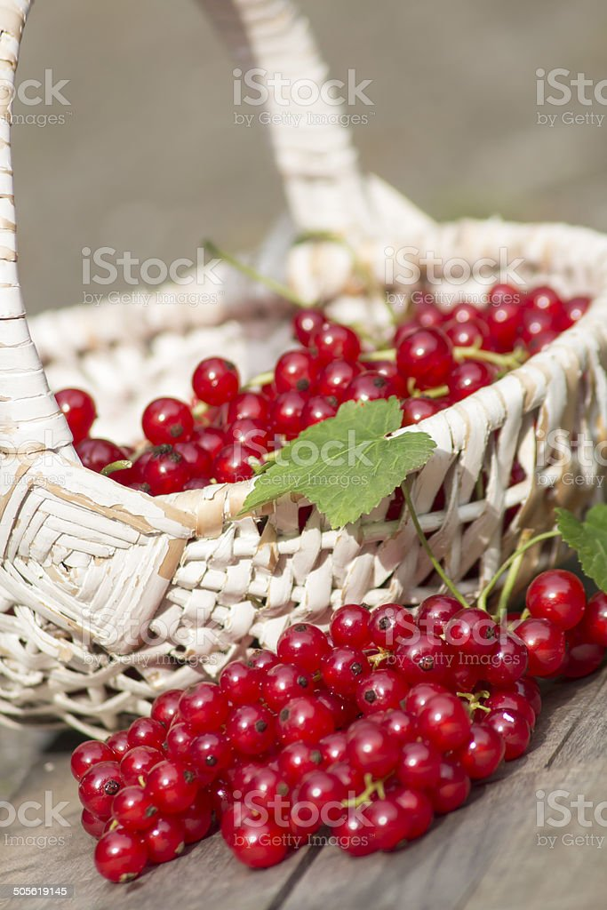 Rote Johannisbeeren Korb stock photo