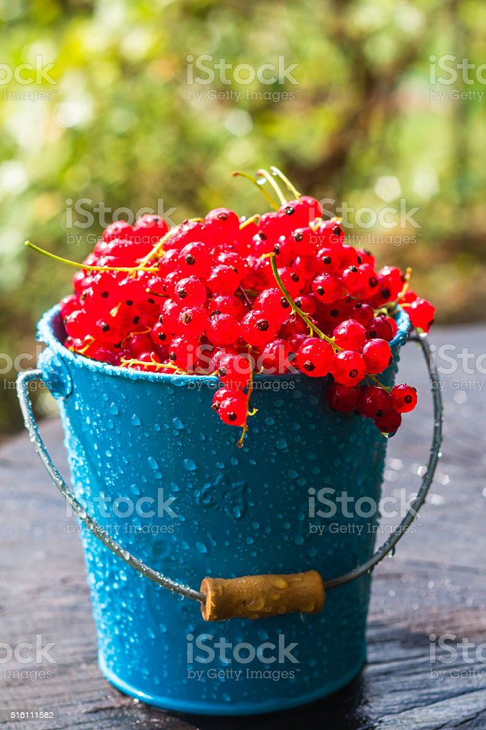red currant fruit bucket summer rain drops water wooden stock photo