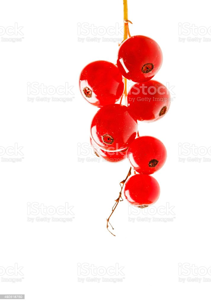 red currant isolated stock photo