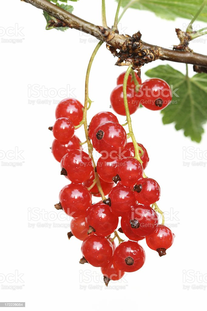 Red currant on white background royalty-free stock photo