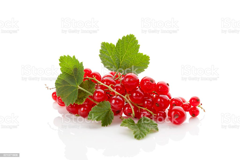 Red currant. stock photo