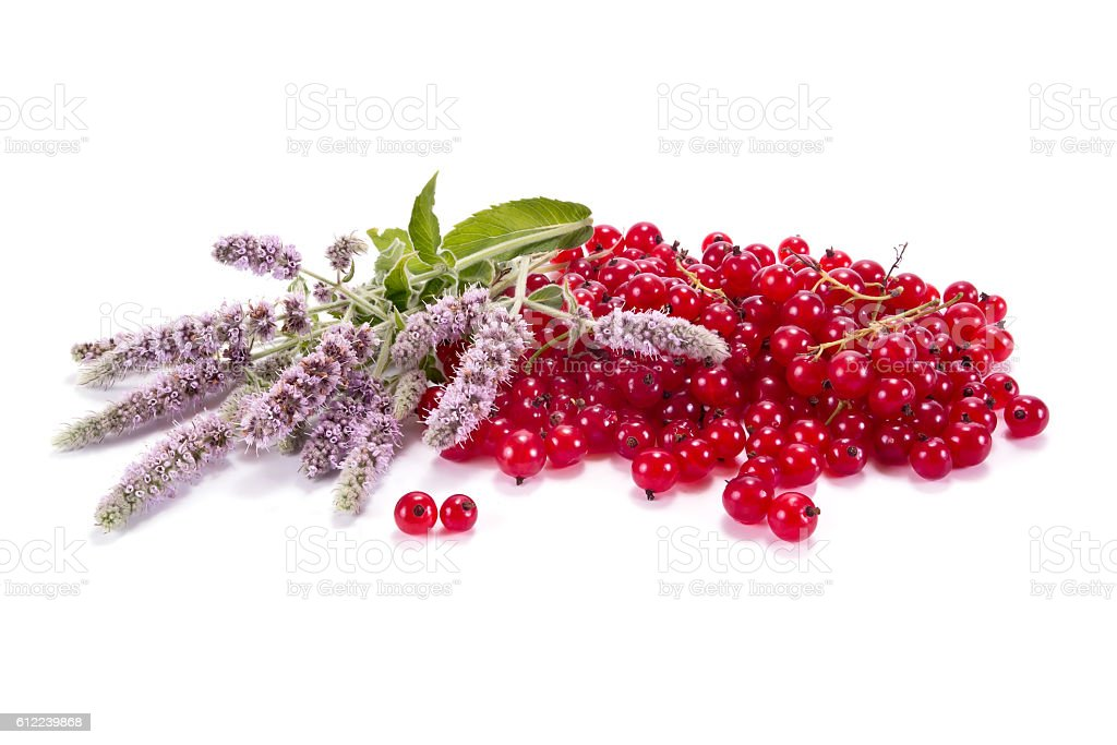 Red currant with the leaves of mint stock photo