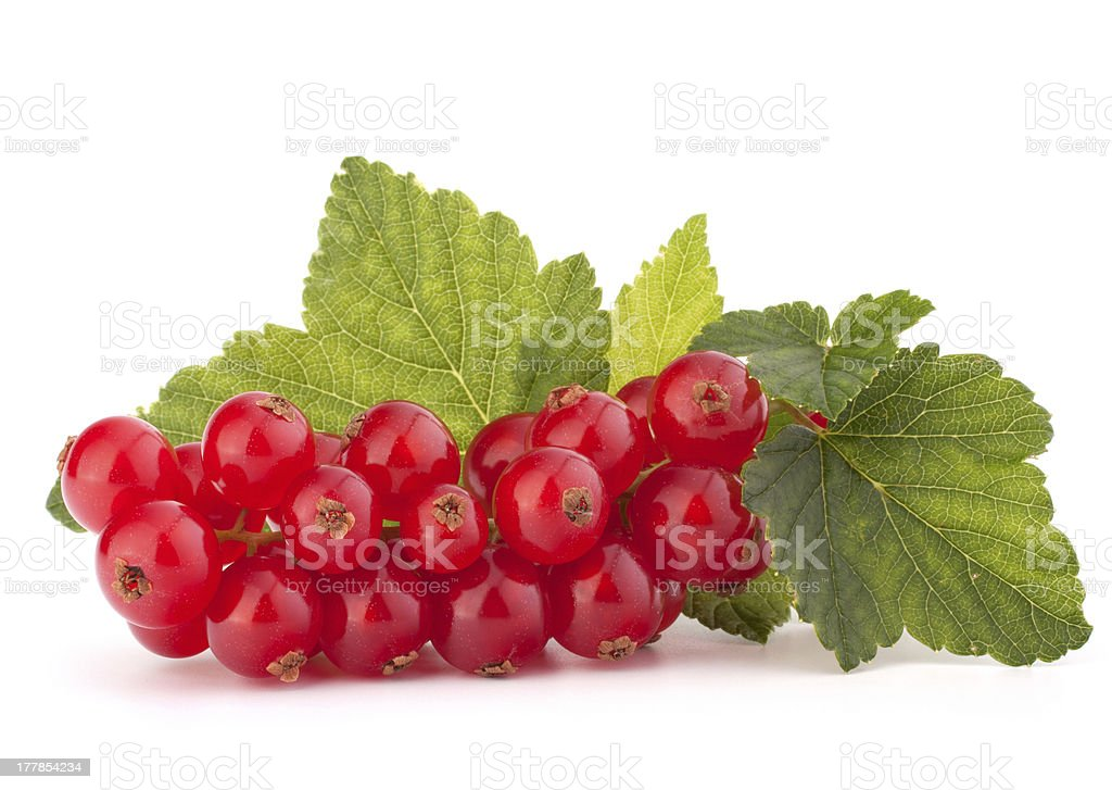 Red currants and green leaves still life royalty-free stock photo