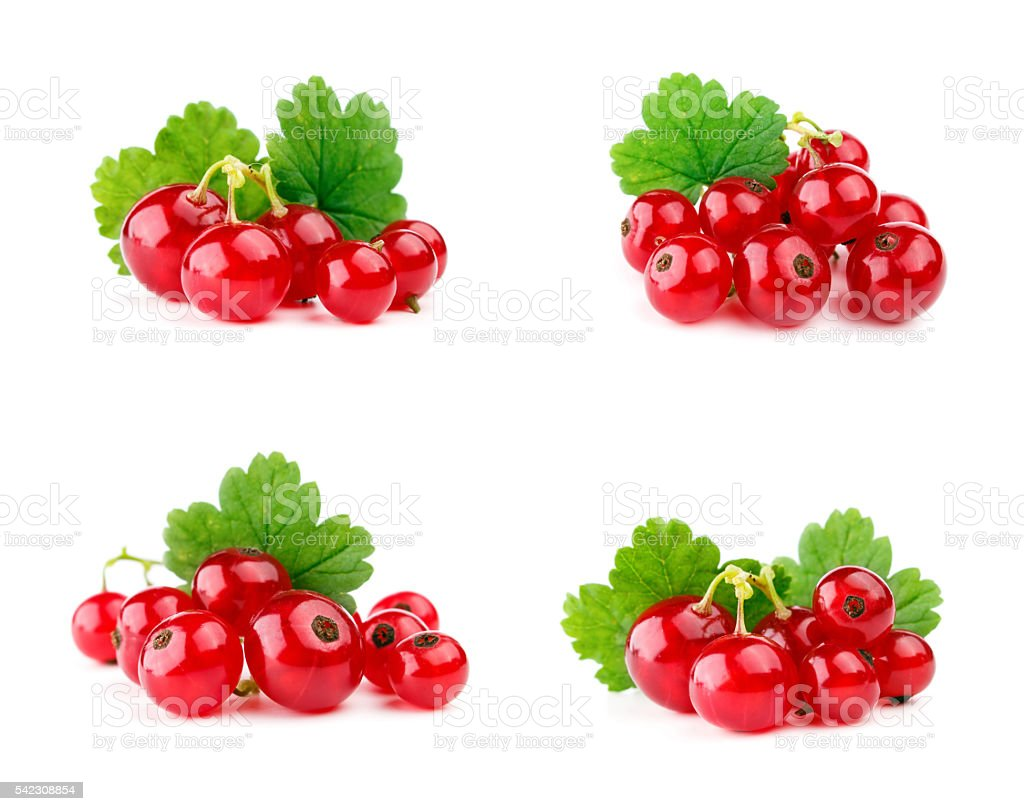 Red currants with leaf isolated on white stock photo