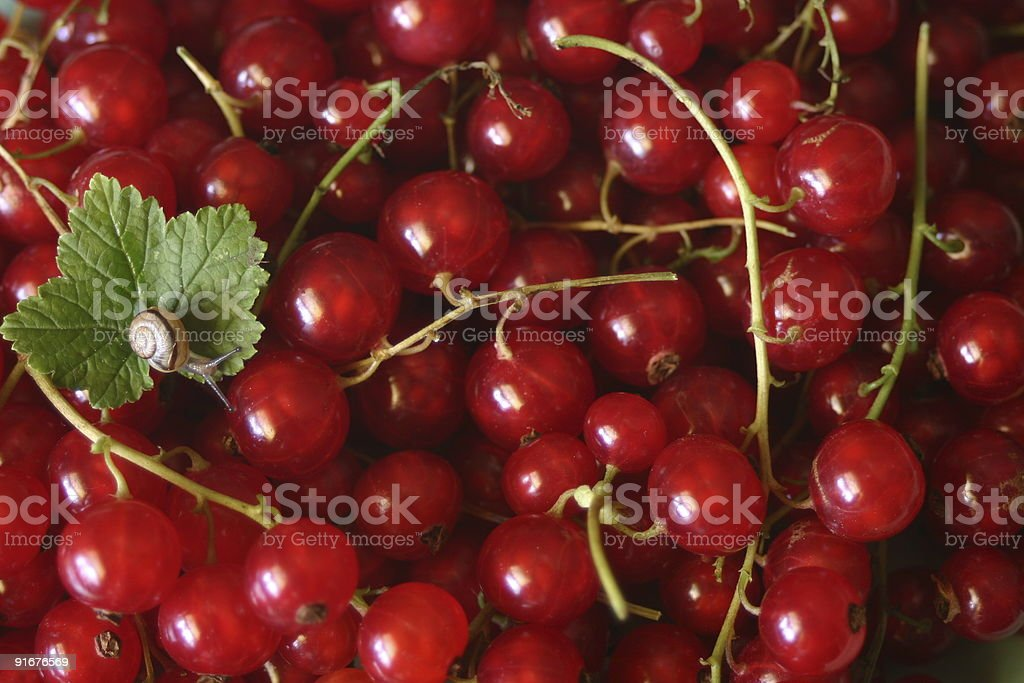 Red currants with snail royalty-free stock photo