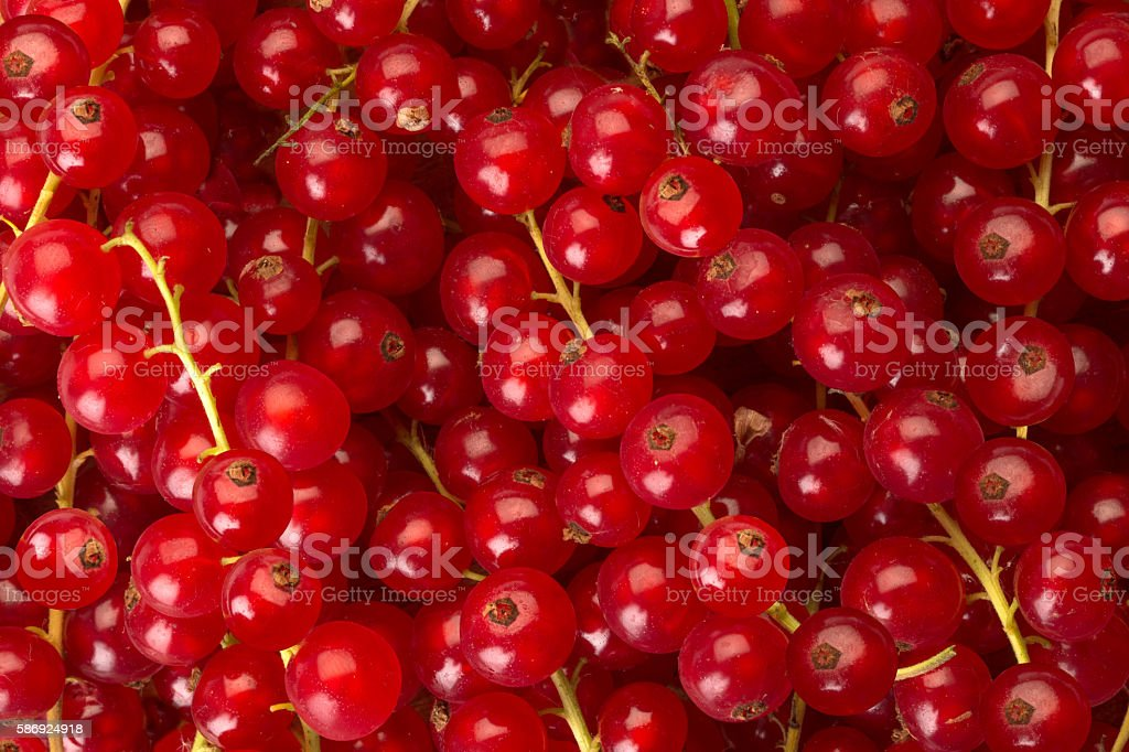 red current stock photo