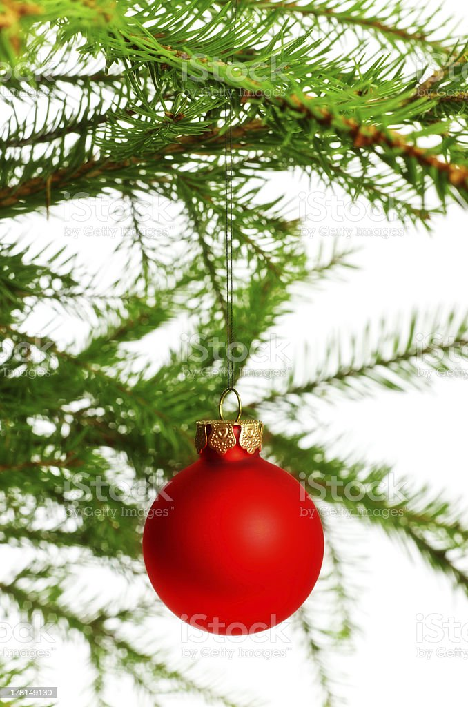 red decoration ball on spruce branch royalty-free stock photo